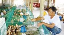 'Chìa khóa' làm giàu trên vùng đất sâu sục ở Quỳnh Giang