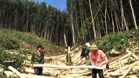 UBND tỉnh phản hồi kiến nghị cử tri về Lâm trường Nghĩa Đàn