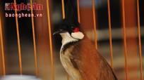 Thú chơi chim cảnh nghìn đô xứ Quỳnh