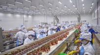 Chú trọng phát huy hiệu quả dòng vốn FDI