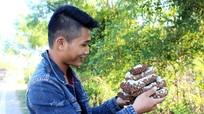 Độc đáo nghề săn ong rừng ở Nam Hưng