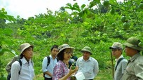 Chanh leo Quế Phong có cơ hội tiếp cận với thị trường Nhật Bản