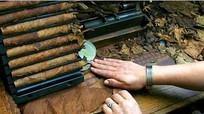Cuba làm xì gà dài nhất thế giới mừng sinh nhật Fidel Castro