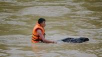 Người dân liều mình vớt củi trên sông Nậm Mộ