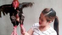 Cô gái trẻ xứ Nghệ thu trên 25 triệu đồng/tháng từ nuôi gà Đông Tảo
