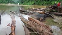 Lũ cuốn hàng trăm khối gỗ từ rừng xuống sông