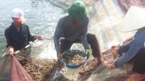 Hiệu quả từ chuyển đổi cơ cấu cây trồng, vật nuôi ở Quỳnh Dị