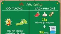 [Infographic] Cách làm thuốc trừ sâu bằng hành tăm, ớt, tỏi, gừng