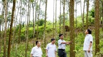 Khảo sát mở rộng vùng nguyên liệu gỗ tại Con Cuông, Quế Phong