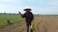 Gieo lúa trực tiếp trên vùng đất khô