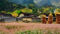 Vì sao khách Tây thích sống ở Việt Nam?