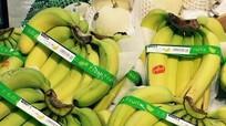 Chuối Việt Nam chiếm lĩnh hệ thống siêu thị toàn Nhật Bản