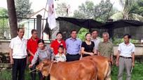 Hội Chữ thập đỏ Quỳ Hợp tặng bê sinh sản cho hộ nghèo