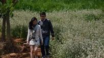 Cánh đồng hoa tam giác mạch nở rộ ở Lâm Đồng