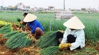 Quỳnh Lưu thắng lớn vụ hành hoa hè thu