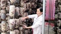 Những mô hình 'đánh thức' vùng đất hoang hóa ở Anh Sơn
