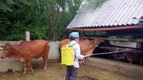 Phòng chống dịch bệnh cho gia súc sau mưa lũ