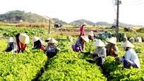 Nghệ An có 41 HTX Nông nghiệp sản xuất, kinh doanh giỏi