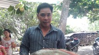 Cá sủ vàng nửa tỷ đồng, ngư dân miền Tây chưa chịu bán