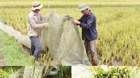 Dùng lưới săn cào cào kiếm tiền triệu mỗi ngày