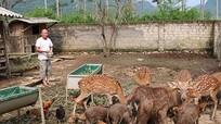 Nông dân làm giàu từ 'nuôi con đặc sản'