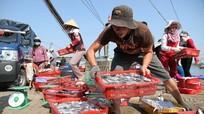 Video những hải sản miền Trung chưa nên ăn