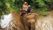 Campuchia: Voi giết chủ rồi đuổi theo 'bạn gái' vào rừng