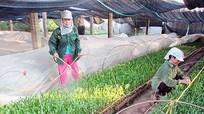 9 tháng, Nghệ An trồng rừng đạt trên 96% kế hoạch