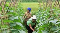 Bà con dân tộc vùng biên giới trồng dưa Thái Lan để thoát nghèo
