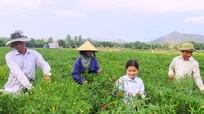 Tiêu thụ rau an toàn: Thiếu liên kết bền vững