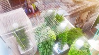 Mách nước cách trồng rau khí canh 'siêu' nhàn hái mỏi tay