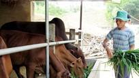 Những mô hình chăn nuôi hiệu quả ở Nghĩa Khánh