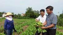 Hỗ trợ 50% tiền giống chuyển đất hai lúa trồng màu vụ đông