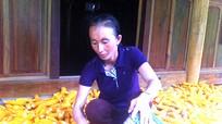 Người phụ nữ Mông tiên phong phát triển kinh tế vùng biên viễn