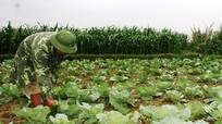 Cần quan tâm chính sách phát triển nông nghiệp bền vững