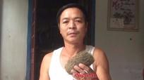 Nghệ An: Mổ lợn phát hiện 'trư cát' được trả giá 3 tỷ đồng