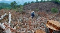 Kỷ luật nhiều cán bộ trong vụ 'Dọn sạch 108 ha rừng'