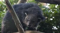 Những động vật quý hiếm ở Vườn quốc gia Cúc Phương