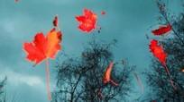 Những khoảnh khắc tuyệt đẹp của mùa thu