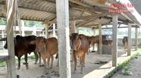 Chợ thành chuồng bò