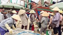 Ngư dân thu tiền tỷ trong đợt biển động