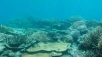 Hình ảnh đối lập của rạn san hô trước sự hủy diệt của biến đổi khí hậu