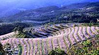 'Đá nở hoa' trên cao nguyên Hà Giang