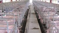 Masan đầu tư dự án nuôi lợn nghìn tỷ ở Nghệ An
