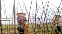 Nông dân Nghệ An tích cực khắc phục sản xuất sau mưa lũ