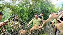 Nghệ An thực hiện giải pháp cấp bách bảo vệ động vật hoang dã