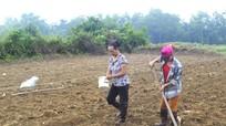 Nghệ An sẽ chuyển đổi trên 5.000 ha đất lúa sang trồng màu, nuôi thủy sản