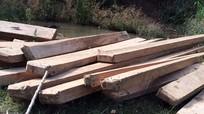 Phát hiện số lượng lớn gỗ bên khe suối