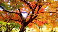Sắc vàng mùa thu tuyệt đẹp trên khắp thế giới