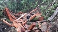Hàng loạt cán bộ bị kỷ luật vì để rừng bị phá